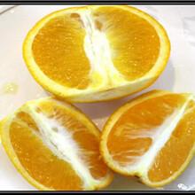 长叶香橙种植技术香橙图片