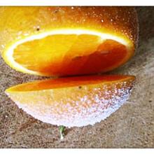 重庆银丰园艺长叶香橙种植技术种苗种植图片