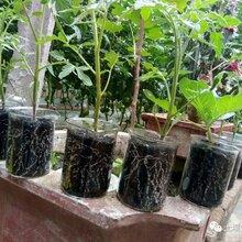廣州豐田寶生物有機肥銷售價格圖片