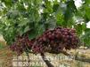 海南豐田寶生物有機肥售價,生物有機肥