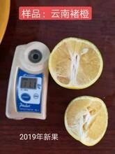 广西银丰园艺长叶香橙种植技术种苗种植香橙图片