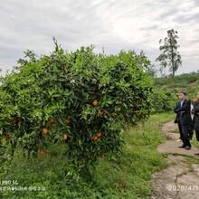 江津周邊農家樂圖片