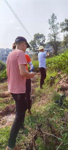 南京長葉香橙苗基地,香橙