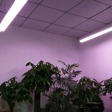 种植专用光源