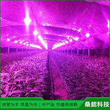 植物生长灯原理