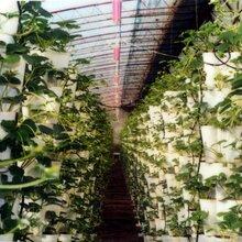 植物生长灯厂家