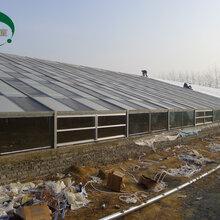 圣亚制造光伏温室大棚建设太阳能光伏温室价格