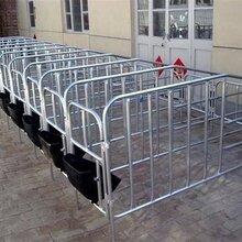 供销养猪设备的技术参数规格猪床母猪产床定位栏漏粪板