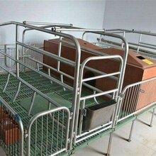 定制猪床定位栏母猪产床食槽规格齐全