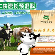 肉牛预混料肉牛快速催肥专用预混料肉牛饲料