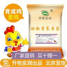 育成期蛋鸡预混料5%蛋鸡预混料鸡饲料