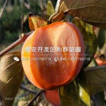 太秋甜柿树苗、太秋甜柿树苗批发