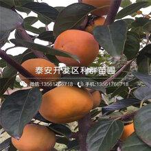 山东甜柿子树苗、山东甜柿子树苗报价