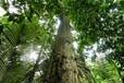 别想的那么复杂,汇生林业投资其实就是这么回事