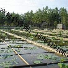 土工膜价格防渗膜价格,土工布厂家,复合土工膜厂家图片