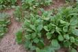 福建福州边坡生态植草绿化袋边坡绿化植草粘合剂用量