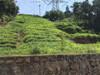 宁夏银川边坡绿化专业公司可以做水库边坡防护的?
