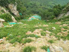 岩石边坡种草绿化专用草籽厦门市供应