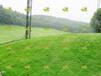 草籽播种配合比例高速护坡绿化草籽供应商