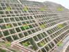 承接广东深圳路基边坡复绿项目及公路边坡绿化治理