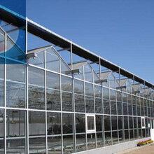 中翔温室文洛式玻璃温室玻璃温室建设温室大棚骨架材料