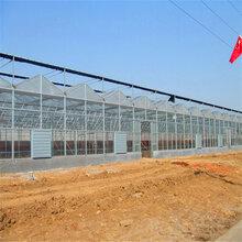 和田连栋玻璃温室厂家直销图片