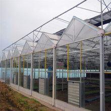 徐州连栋玻璃温室连栋温室结实美观图片