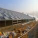 铜陵太阳能光伏温室光伏温室现货供应
