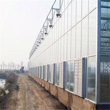 湘潭连栋玻璃温室信誉至上连栋温室图片