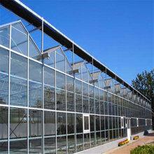 玻璃温室温室大棚厂家温室工程连栋温室