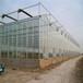 吳忠連棟陽光板溫室連棟溫室品質保證