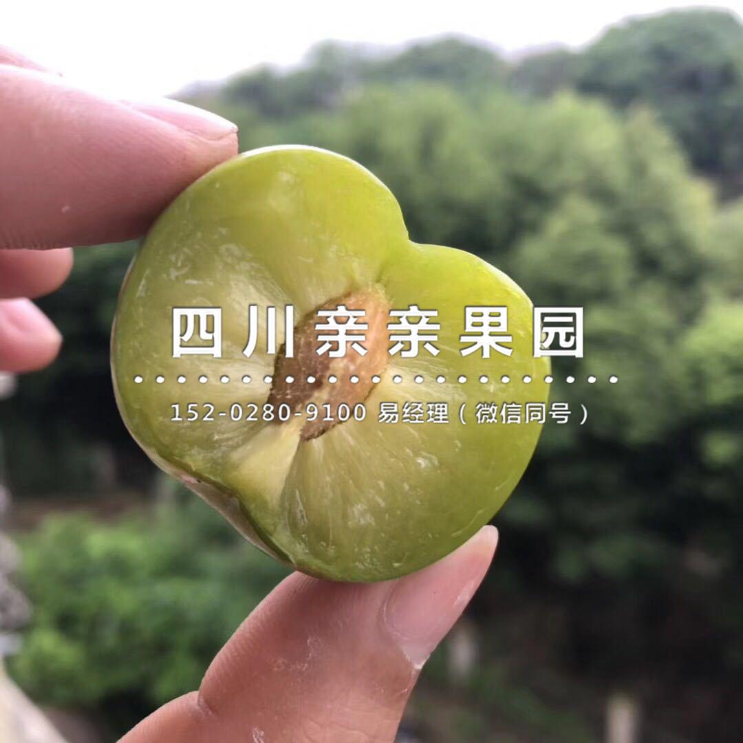 江西空心李苗供应_卖相好的李树苗