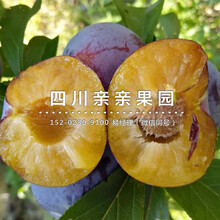 重庆双桥李子苗_李子苗大量供应图片