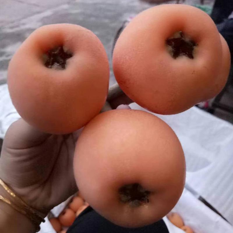永州枇杷苗-永州枇杷苗价格-永州优质枇杷苗