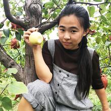 崇左梨子樹苗-崇左梨子樹苗批發-崇左梨子苗新品種圖片