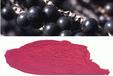 熱銷巴西莓提取物多種規格1公斤起訂廠家包郵