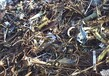 雨花区废旧金属回收热线