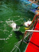 海南海底漫步厂家-广东头盔设备厂家