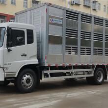 东风系列拉猪专用车辆9米6铝合金恒温运输车图片