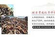 内蒙枣木原木种植园内蒙枣木原木采购热线