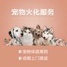 成都宠物安乐/火化/殡葬/全天24小时免费上门接送