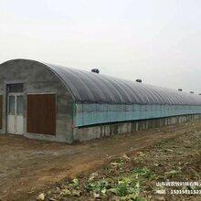 高溫耐堿溫室大棚畜牧養殖恒溫大棚橢圓管方管包塑定制棚