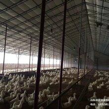 保溫雞舍大棚雞舍自動化恒溫大棚豬場自動化溫室大棚定制食用菌棚
