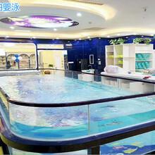 扬州婴儿游泳馆招商图片