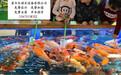 湛江喂奶鱼池厂家、广东吃奶鱼池销售、玻璃钢鱼池价格