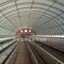 嘉坤畜牧温室大棚智能温室大棚养殖保温大棚