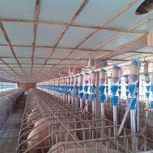 养猪全自动料线的优势和操作步骤介绍