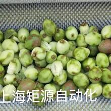 上海矩源猕猴桃果汁果酱果脯罐头食品生产线图片