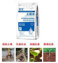 龍燈生物菌肥地衣芽孢桿菌·土菌清疏松土壤,生根壯苗,專治土傳
