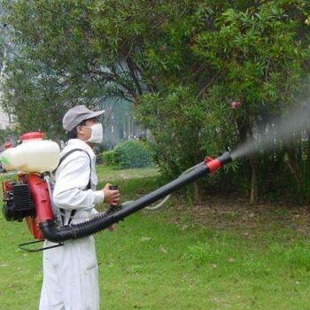 灭苍蝇最有效的方法